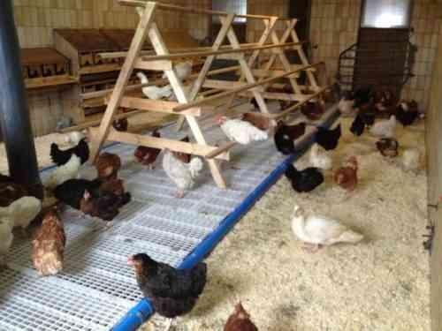 كيفية جعل قن الدجاج