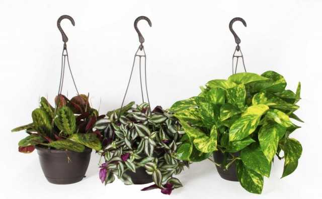 8 نباتات داخلية متقلبة يجب أن تنمو للمبتدئين - نباتات داخلية جميلة