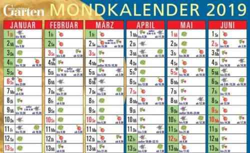 Aussaat von Sämlingen im Jahr 2019 nach dem Mondkalender