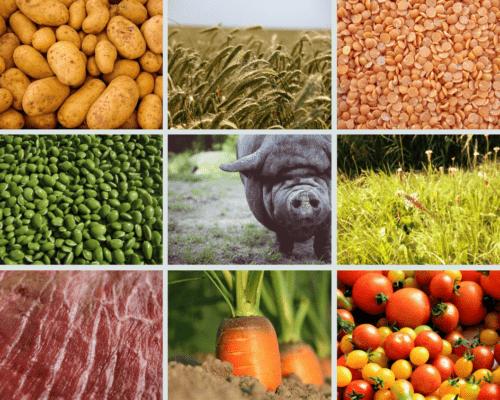 Fütterung und die richtige Ernährung für Schweine
