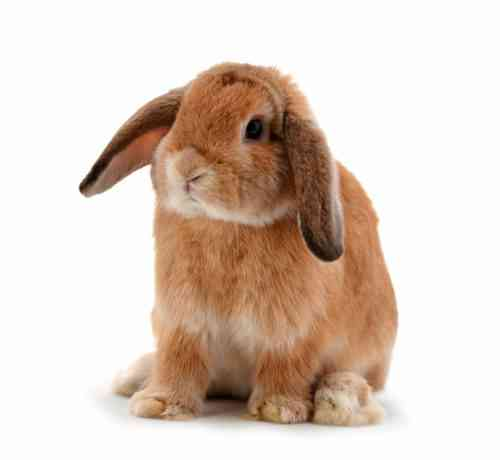 Wie man einen Namen für ein Kaninchen wählt