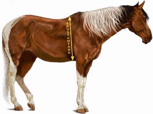 Wie viel sollte ein Pferd wiegen?