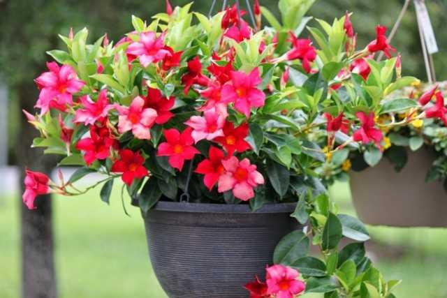 5 der hellsten Zimmerpflanzen aus den Tropen