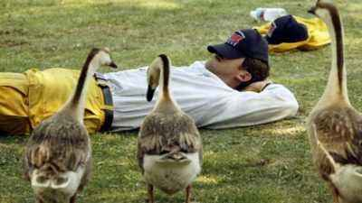 As evidenced by dreams in which geese dream