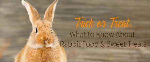 Benefits and harms of rabbit fat