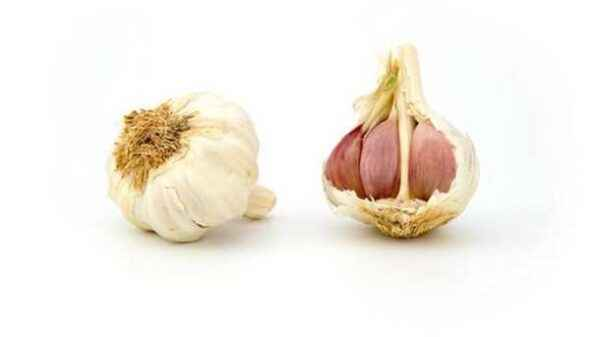Benefits and storage of sprouted garlic