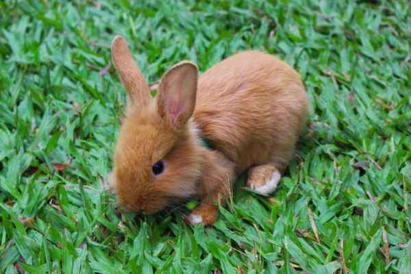 Care for rabbits during growth and development