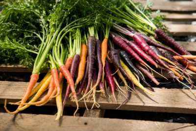 Causes of yellowing and drying of carrot tops