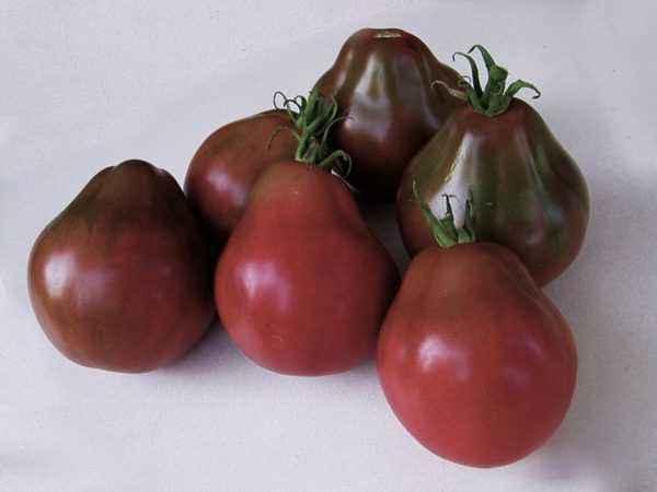Characteristic Tomato Japanese Truffle