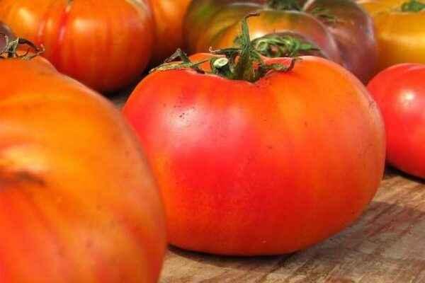 Characteristic Tomato Juggler