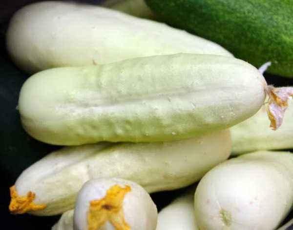 Characteristic varieties of cucumbers White Angel
