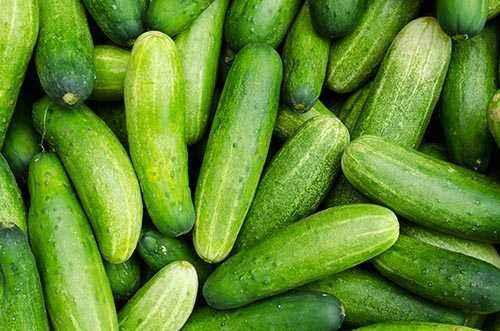Characteristics of Adam cucumbers