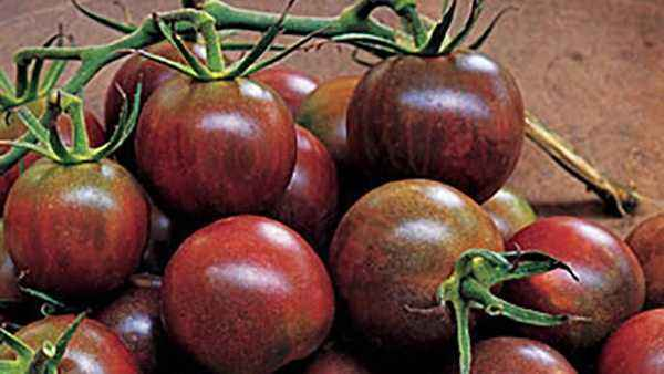 Characteristics of Black Pearl Tomatoes