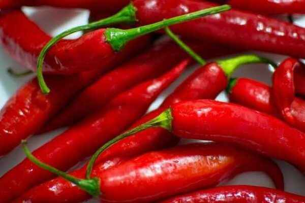 Characteristics of Cayenne Pepper