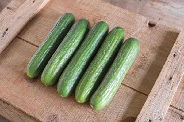 Characteristics of cucumber varieties Chinese Farm f1