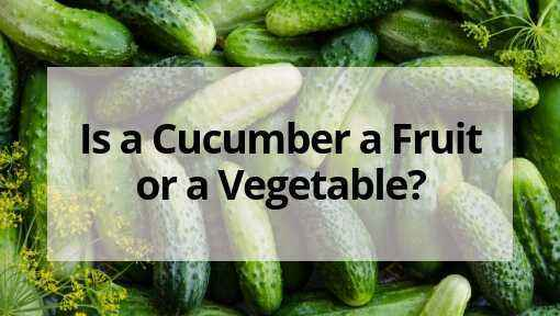Characteristics of cucumber varieties in the letter W.
