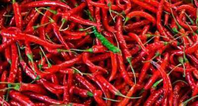 Characteristics of hot pepper varieties Red Fat Man