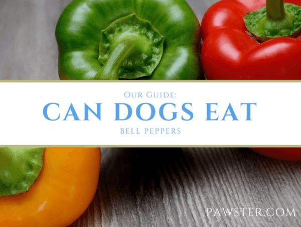Characteristics of Husky salad pepper F1