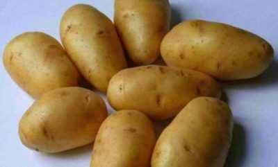 Characteristics of Ilyinsky Potato
