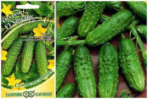 Characteristics Of Khutorok Cucumbers
