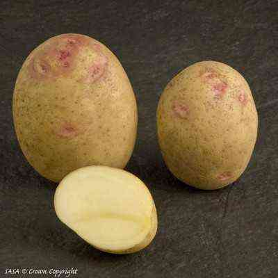 Characteristics of Picasso Potatoes
