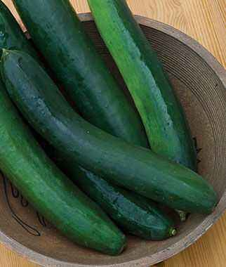 Characteristics of Picnic Hybrid Cucumbers