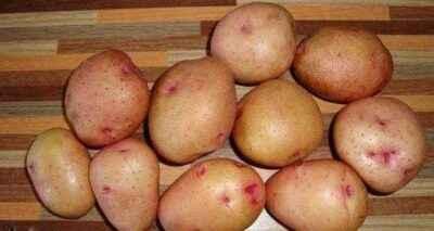Characteristics of potato varieties Zhukovsky (early)