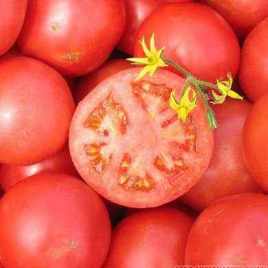 Characteristics of Tarpan Tomatoes