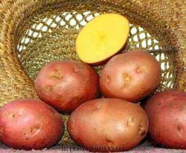 Characteristics of the potato cultivar Bellarosa