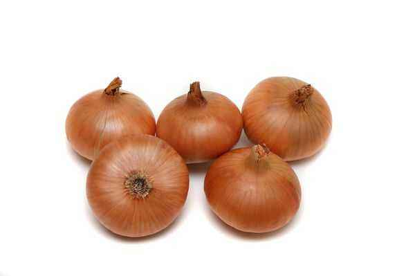 Characteristics of the Shetan onion sets