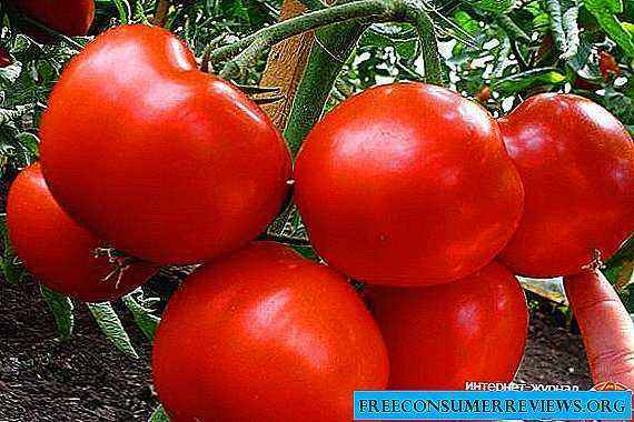 Characteristics of the tomato variety Country pet