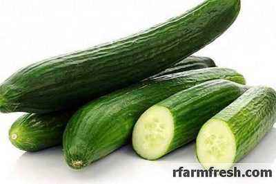 Characteristics of the variety of cucumbers Relay race