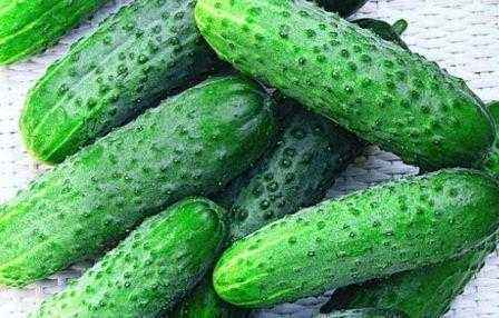 Characteristics of the variety of cucumbers Satin