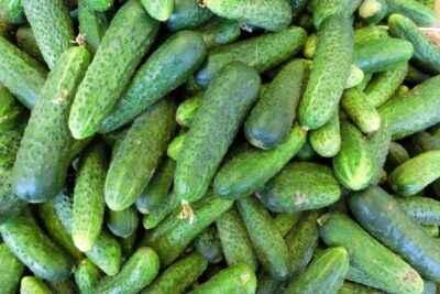 Characteristics of the variety of cucumbers Vyaznikovsky 37