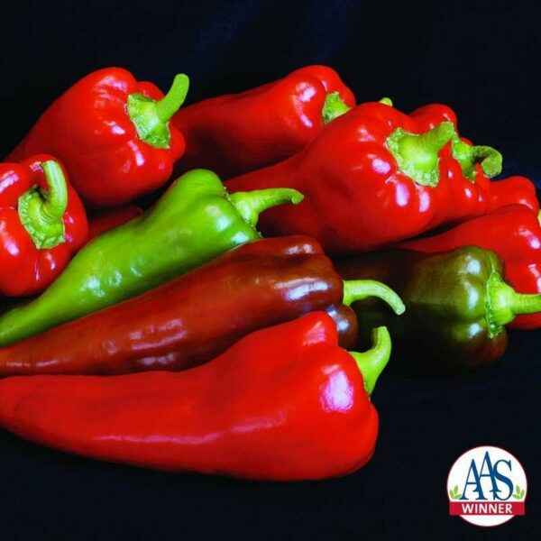 Characteristics of the variety of peppers Temp