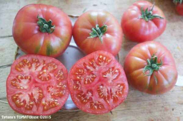 Characteristics of the variety of tomatoes Gift to a woman
