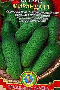 Characteristics of the Vyatsky cucumber variety