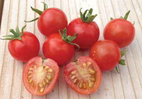 Characteristics of tomato varieties Cherry Red