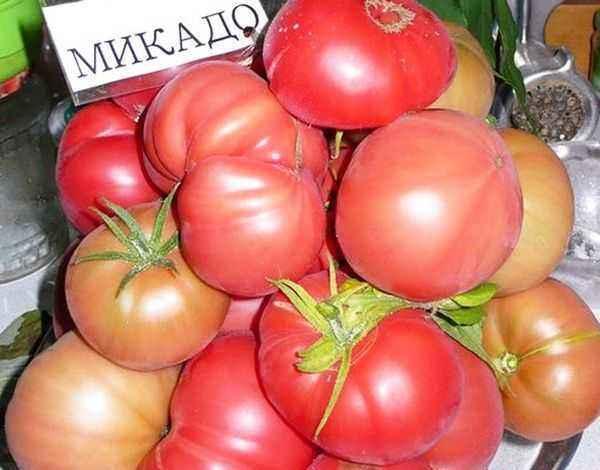 Characteristics of tomato variety Mikado Pink