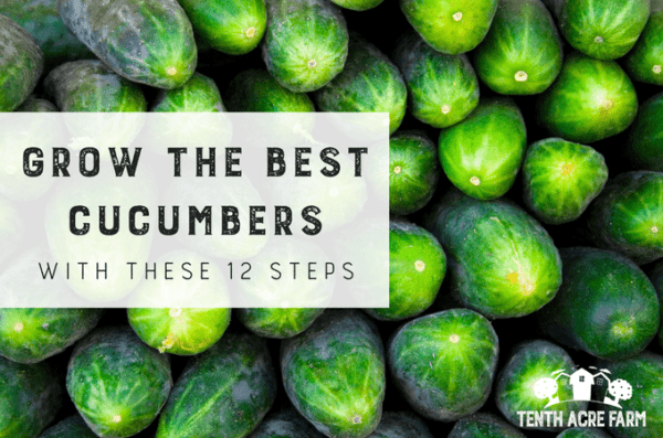 Common varieties of cucumbers for open ground in the suburbs