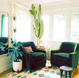 Decorative room Euphorbia