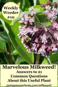 Description and rules for the content of milkweed