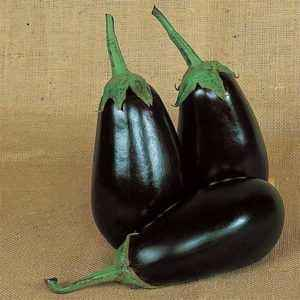 Description eggplant varieties Epic