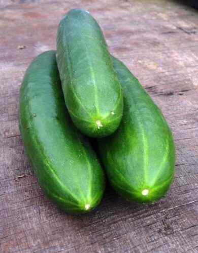Description of determinant and indeterminate varieties of cucumbers