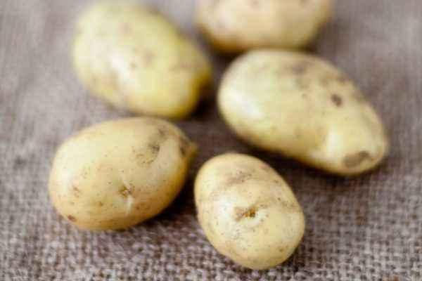 Description of Early Potato Varieties
