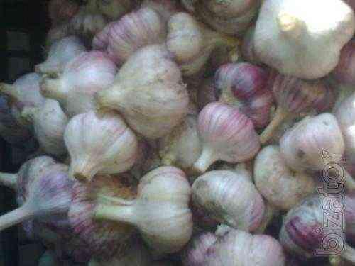 Description of garlic varieties Lyubasha