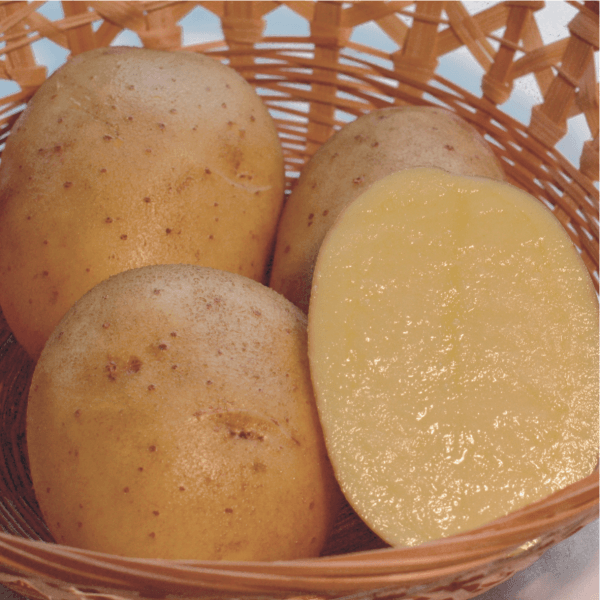 Description of Inara Potatoes