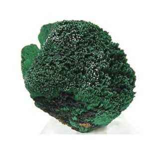 Description of malachite cabbage