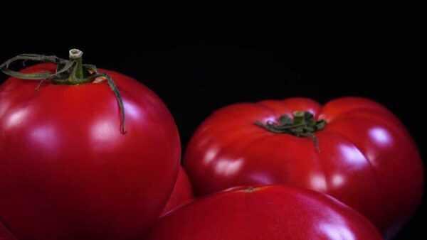 Description of pink capia tomato