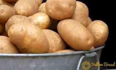 Description of potato Elizabeth